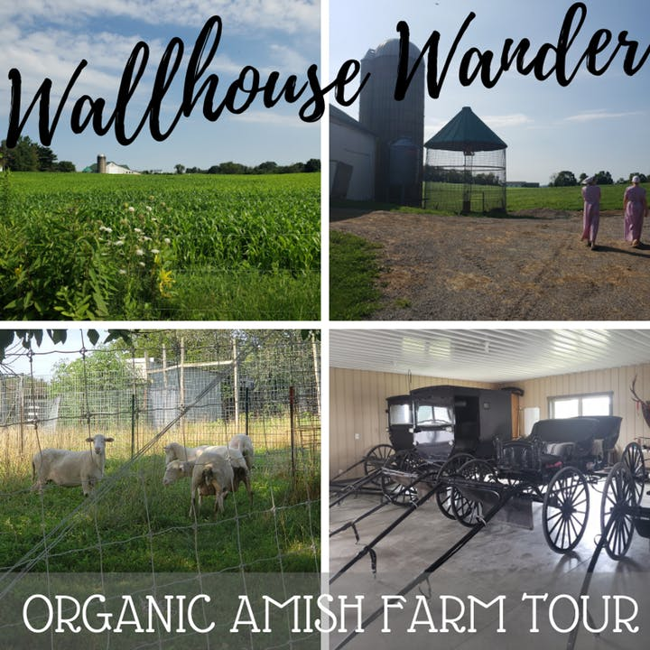 Amish tourism in walnut creek, oh